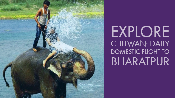 Explore Chitwan:  Daily Domestic flight to Bharatpur